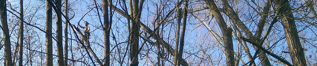 Frankfurt Baum Umgefallen